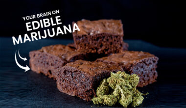 Brain On Edible Marijuana