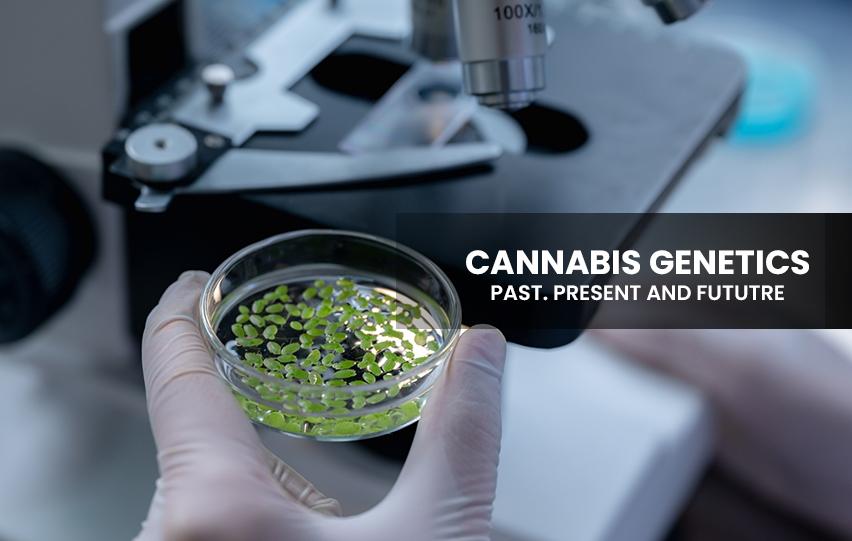 Cannabis Genetics ast, Present and Future